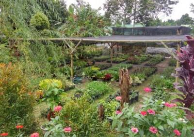 kampoenganggrek - galeri tanaman hias