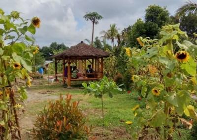 kampoenganggrek - taman bunga